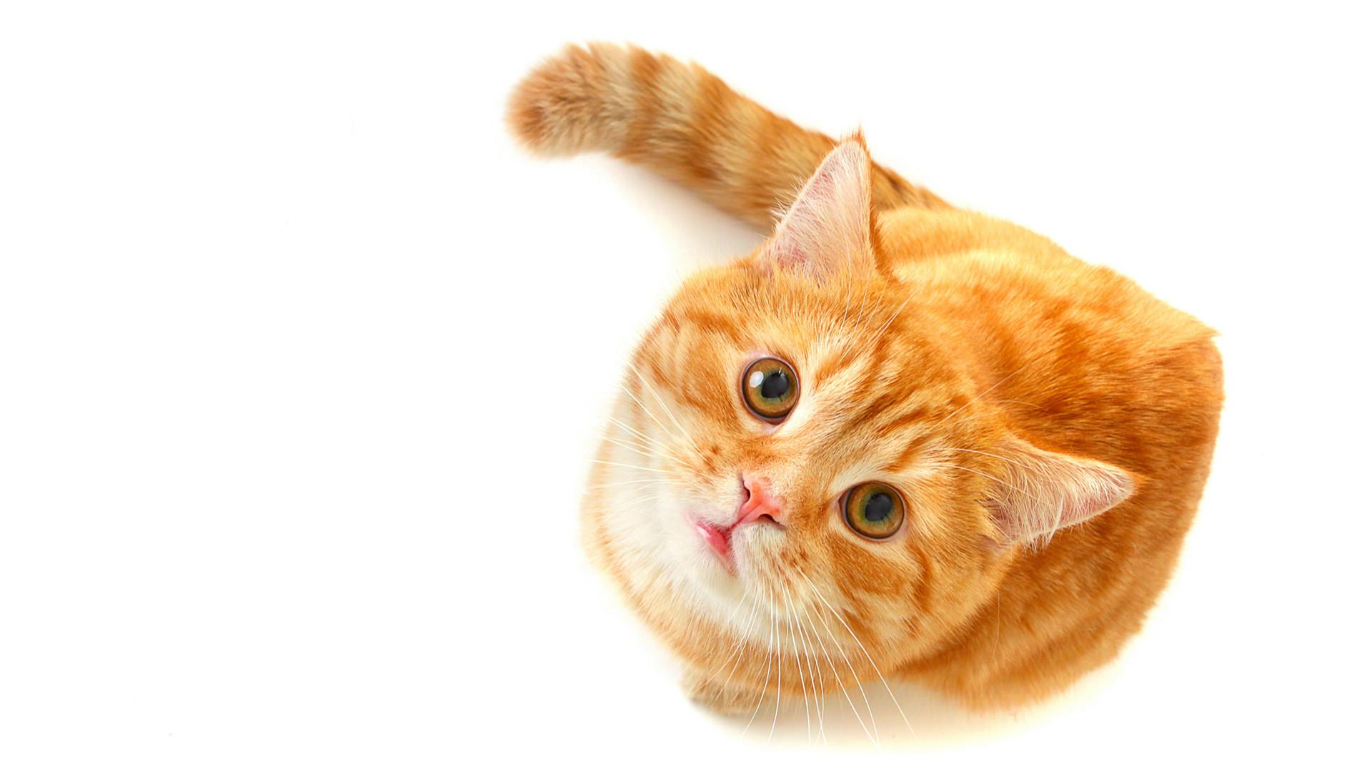 可爱的超萌小猫咪