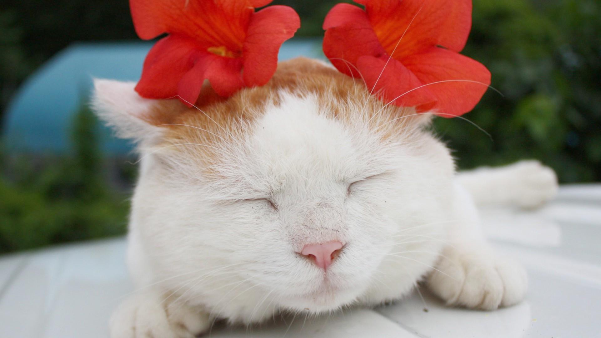 经典萌猫萌表情暖照