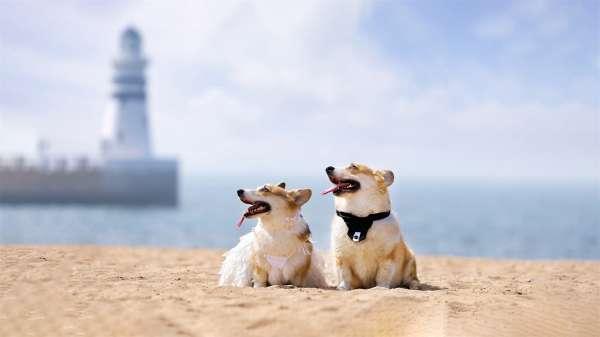 可爱的萌宠狗狗高清图片