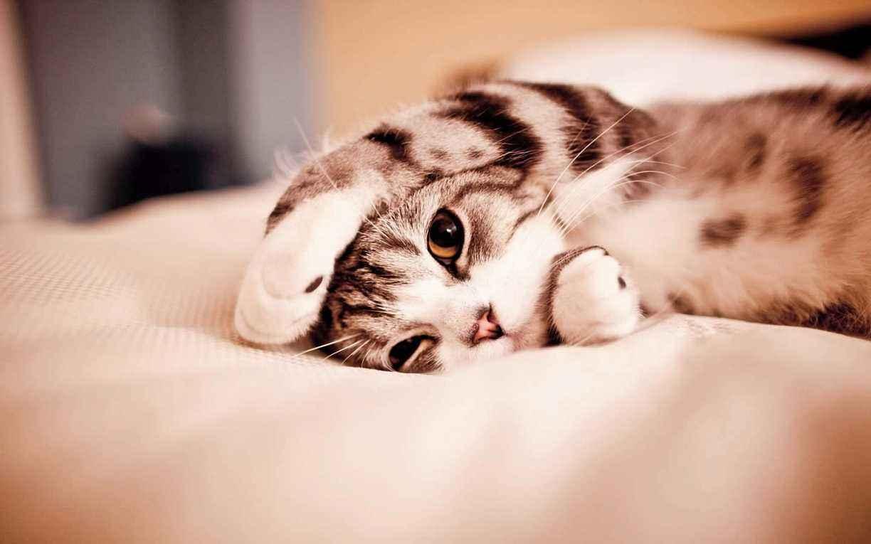 公猫绝育的优缺点有那些?