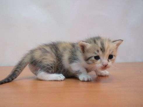 幼猫吃什么猫粮好?满足这些要求就行了