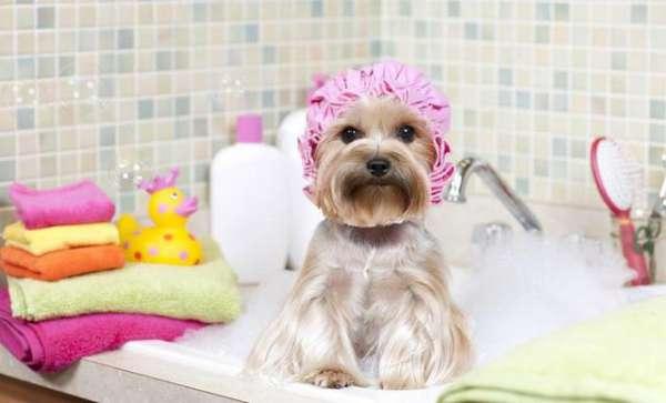 宠物送洗要注意的三大问题