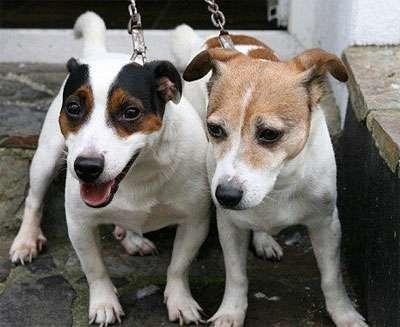昏迷主人16小时,英两宠物狗用体温救主
