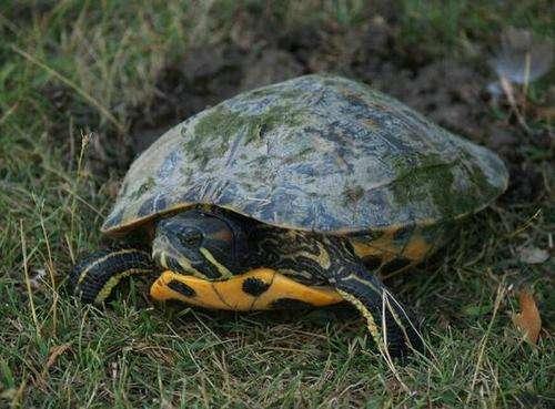 小乌龟睁不开眼睛怎么办?