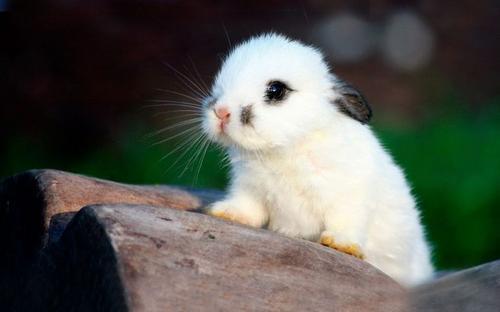 如何制止兔兔乱翻垃圾桶?