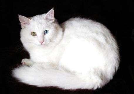 猫咪会进入你的被子,几个小技巧让猫咪学会回窝睡?