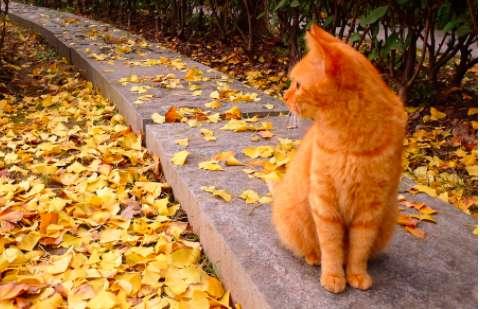 橘猫多少钱?橘猫是什么品种的猫?