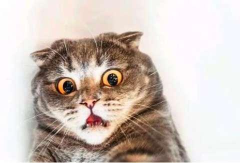 宠物猫夏天食物中毒症状与治疗