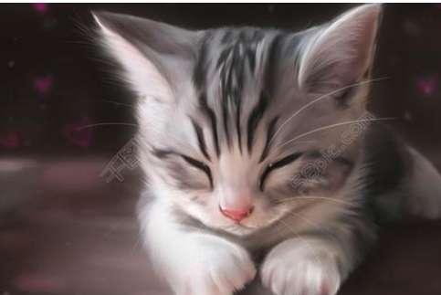猫传染性贫血症状与治疗措施