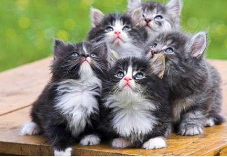 猫鼠疫主要症状与治疗措施