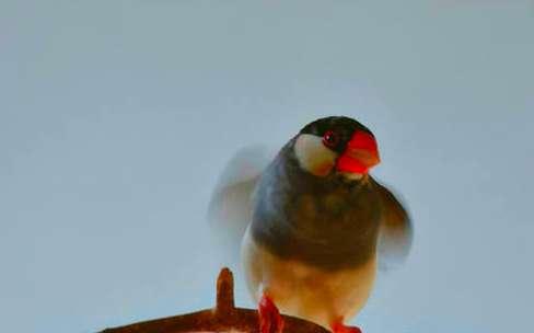 详解鸟儿在蛋内孵化全过程