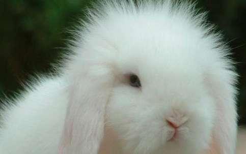 什么样的兔子不宜繁殖后代!