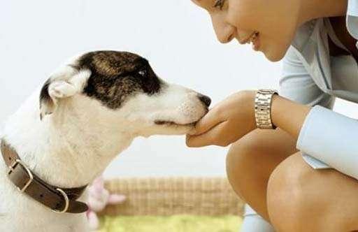 动物学家研究:狗将变得越来越聪明,能预测人类行为?