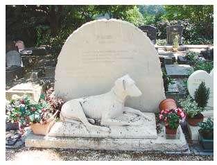 狗主与爱宠合葬,日本宠物墓地疯抢而空