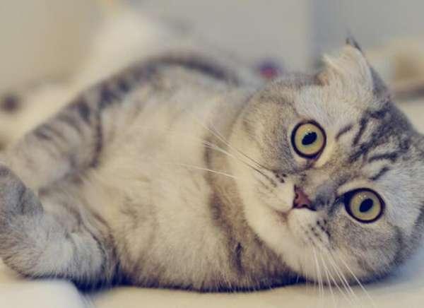 打了猫咪猫咪会记仇吗?