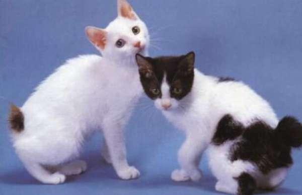 给反抗猫剪指甲的技巧!