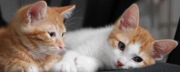 猫咪的社交行为?