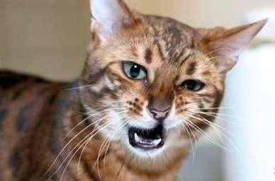 猫咪打喷嚏有哪些原因?