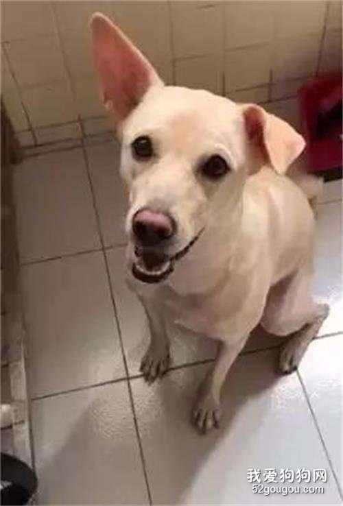 狗子被拒绝给肉肉,它一怒之下露出这个表情,笑哭