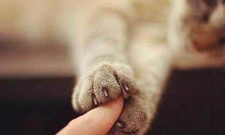 关于猫咪爪子的四个常识