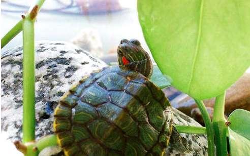 乌龟也会得抑郁症吗?