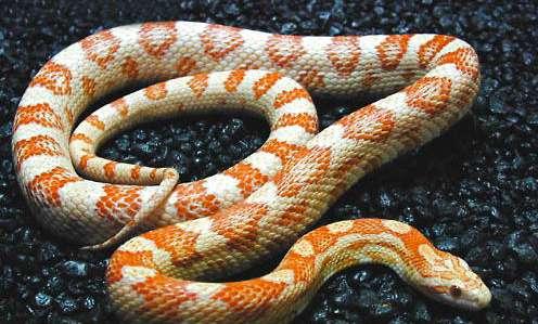 怎么处理蛇体内寄生虫?