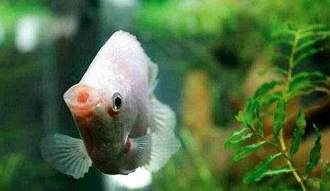 养鱼为什么老是会死?