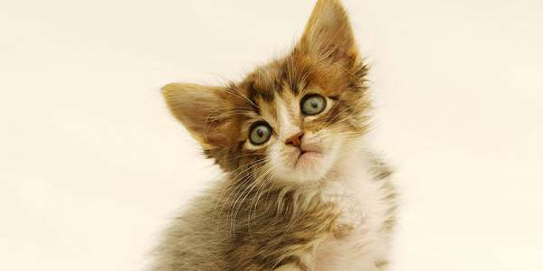 公猫绝育必须打疫苗吗?
