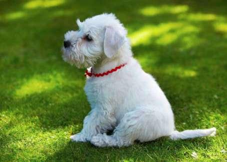 小狗怎么正确喂驱虫药?