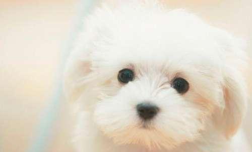 狗狗清晨呕吐是怎么回事?
