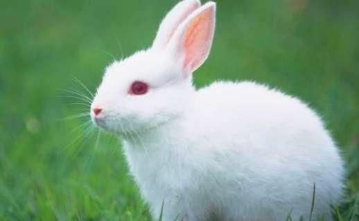 家里养兔子要喂水吗?