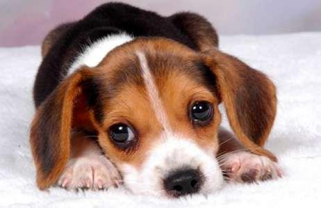 狗狗绝育后不拆线可以吗?