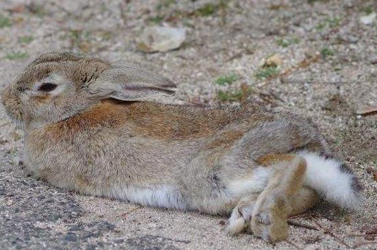 兔子繁殖方法