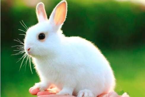 兔子在笼子里乱蹦像发疯了一样