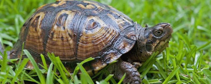 乌龟可以吃什么东西