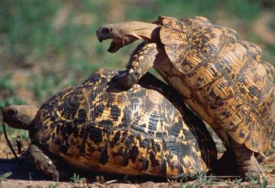陆龟晒太阳晒多久?