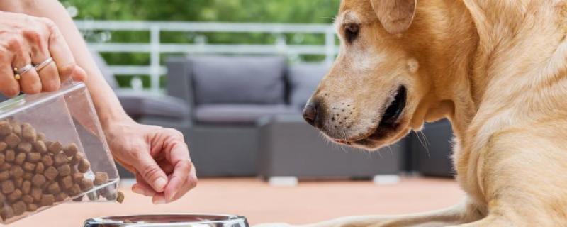 狗狗正确喂食时间表