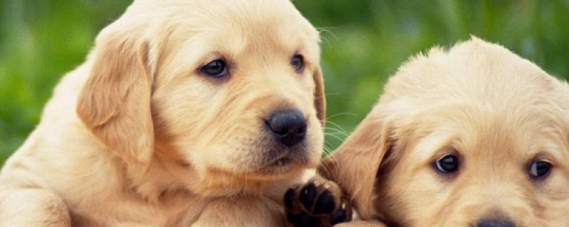 训练狗狗上厕所教程