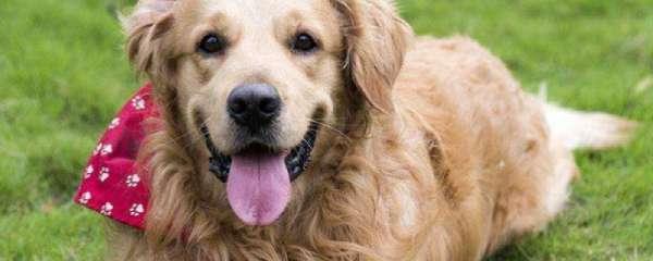 木糖醇对狗的危害