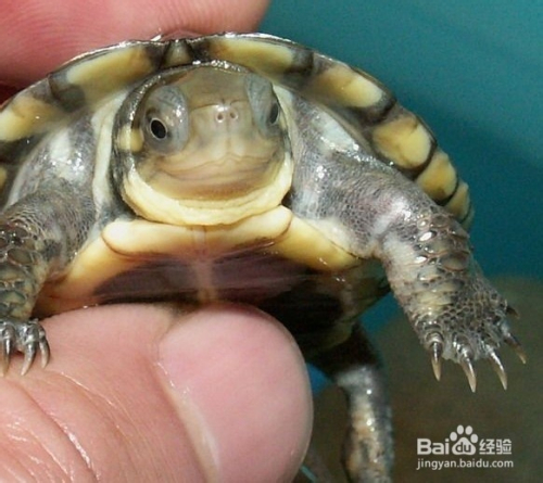 乌龟吃什么怎么养