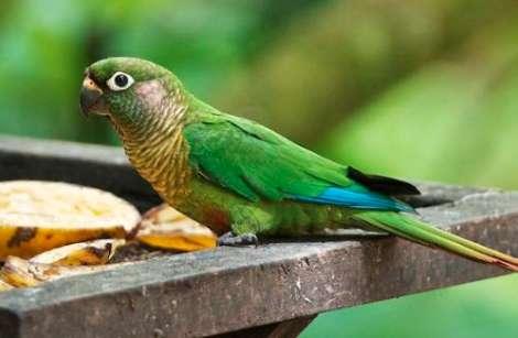 饲养鹦鹉时要注意的常见疾病