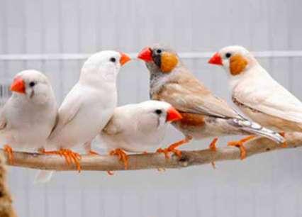 观赏鸟训练定点排便 训练鸟定点排便有多难?