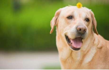 如何纠正狗狗因恐惧而吠咬?