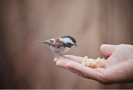 教你如何训练飞鸟回笼?
