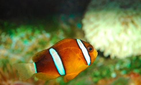 养海水鱼需要准备哪些设备?