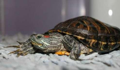 饲养龟龟时容易常犯的错误
