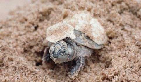 寒冷冬季也可以让龟龟苏醒?