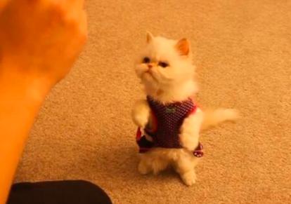 怎么训练猫咪不乱捡东西吃 猫咪训练方法