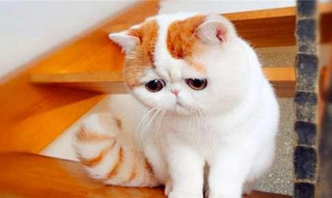 为什么猫咪难训练 猫咪训练难度大原因分析