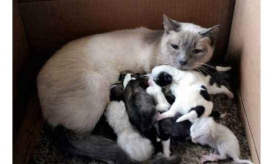 母猫奶水不足如何解决 母猫催乳方法